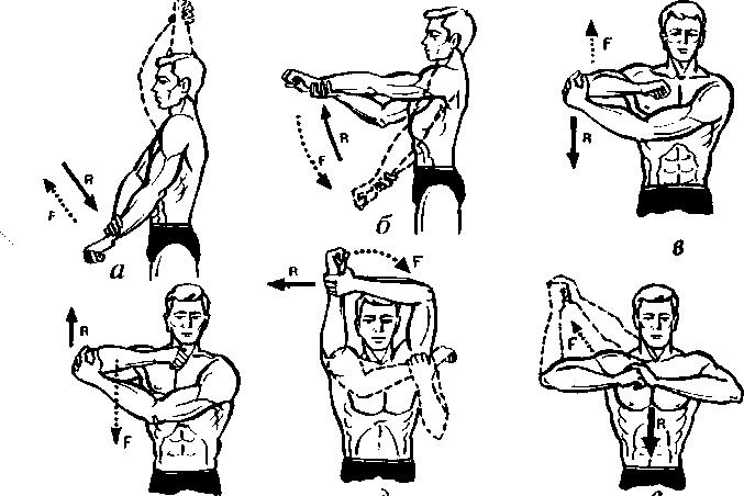 Большую роль в работе мышц
